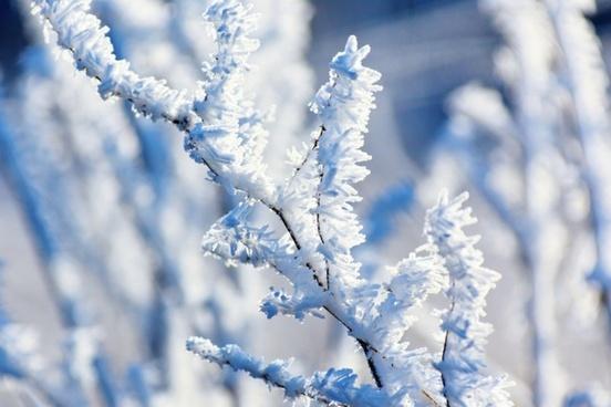 hoar frost on a branch