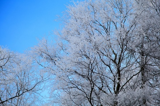 hoar frost on tree
