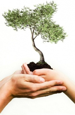 holding ornamental tree stock photo