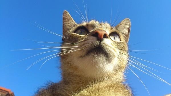 homemade cat felines