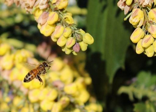 honey bee honeybee flying