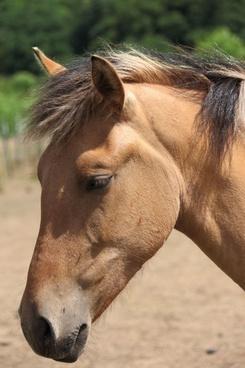 horse039s head