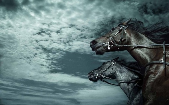 7 Horse Images Free Stock Photos Download 7 782 Free Stock Photos For Commercial Use Format Hd High Resolution Jpg Images
