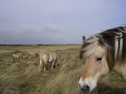 horse animal horse head