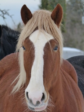 horse animal mammal