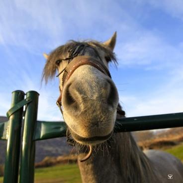 horse animals horse head