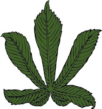 Horse Chestnut Leaf clip art
