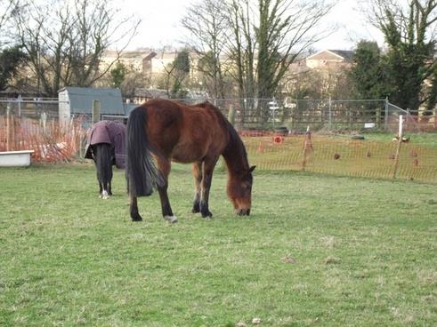 horse down on the farm