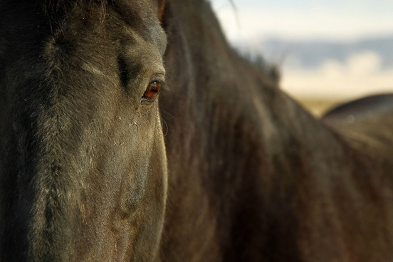 horse equine eye