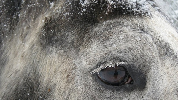 horse eye horse head