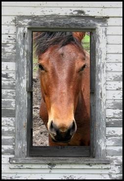 horse frame farm