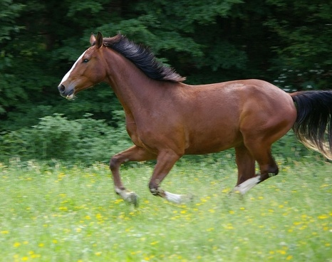 horse gallop animal