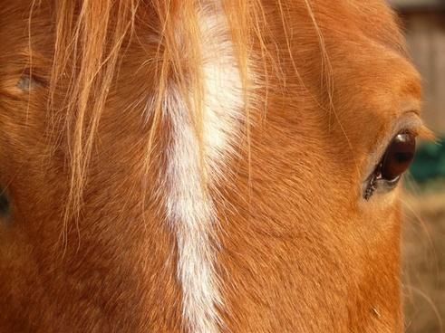 horse head horse eyes