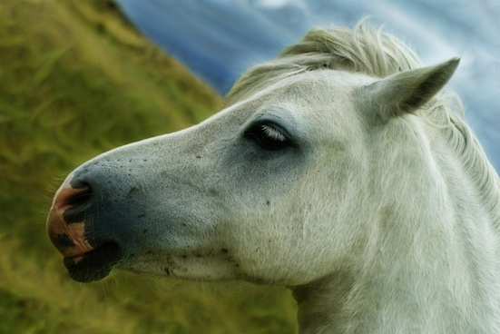 horse horse head animal