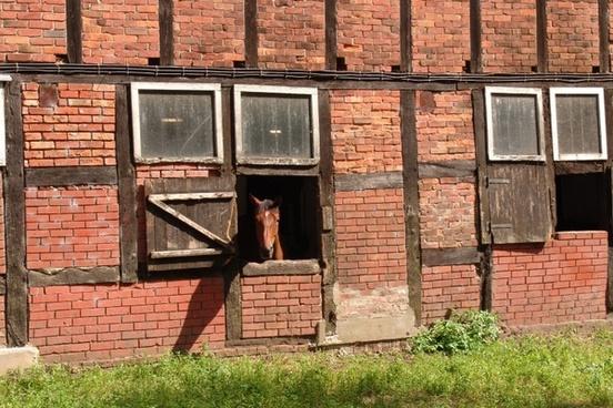 horse horse stable fachwerkhaus