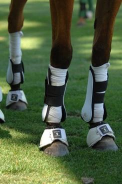 horse legs polo