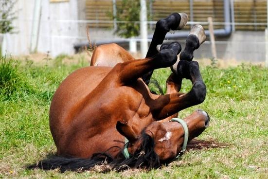horse mare animal