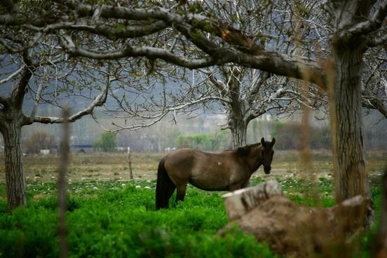 horse mountain field