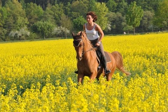 horse reiter rapsfeld