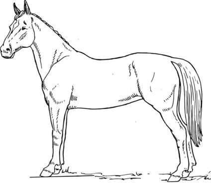 Horse scheme