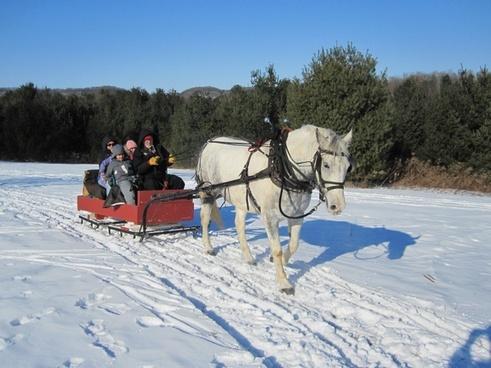 horse sleigh sleigh ride