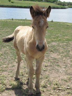 horse stallion mare