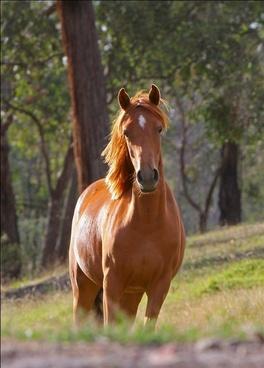 horse stella animal