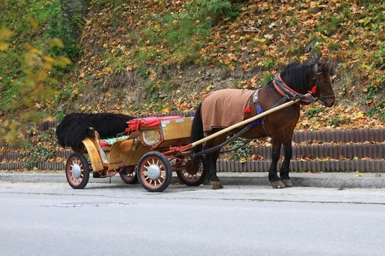horse transportation autumn