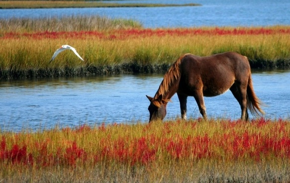 horse wild horse marsh pony