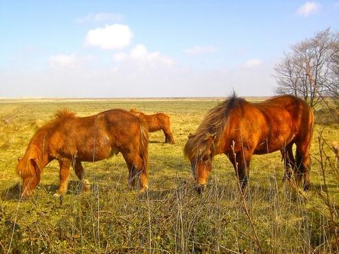 horses animal ride