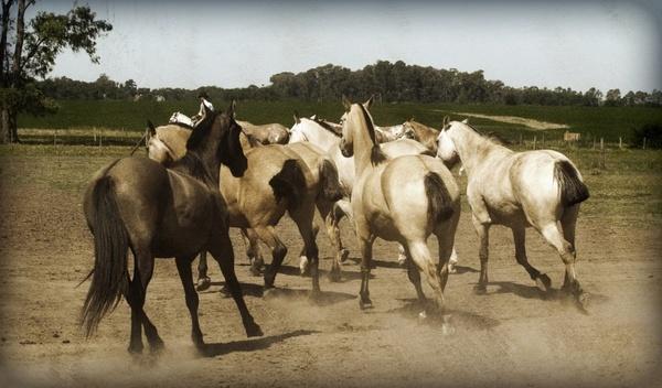 horses animal stylized