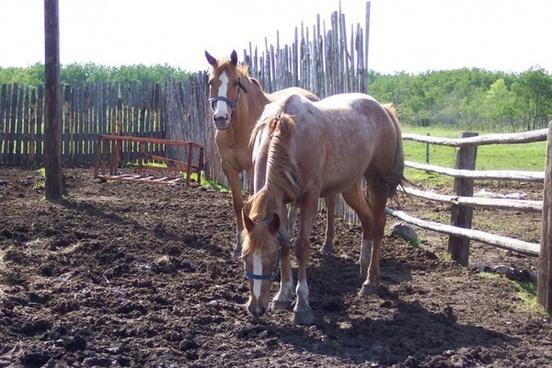 horses corral