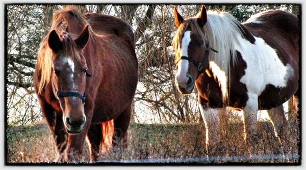 horses country farm