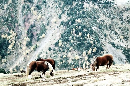 horses girona landscape