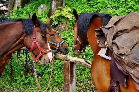 horses pets wildlife