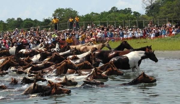 horses ponies stream