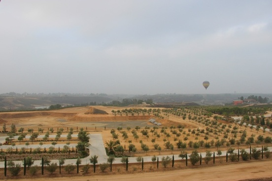 hot air balloon over fields of planted trees