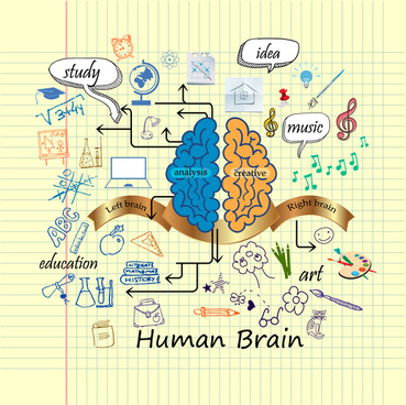 human brain infographic design with hand drawn style