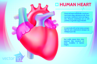 Human heart pictures free download free vector download 6614 free human heart medical vector graphics ccuart
