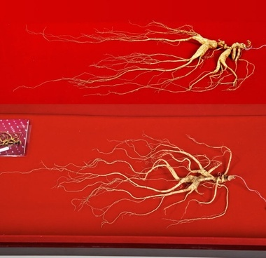 hundred wild ginseng hd photos