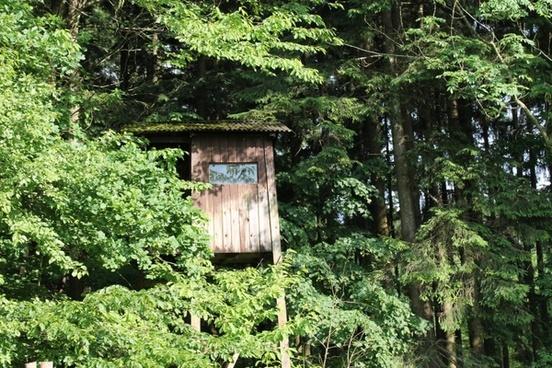 hunter was hidden forest