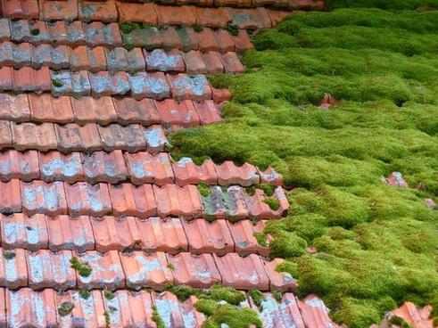 hut roof moss