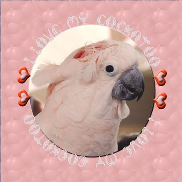 i love my cockatoo