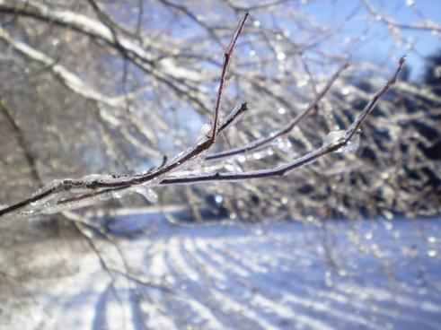 ice on branch