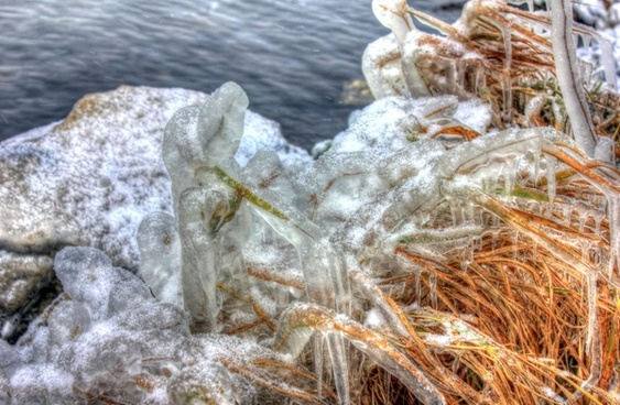iced plants at shabbona lake state park illinois
