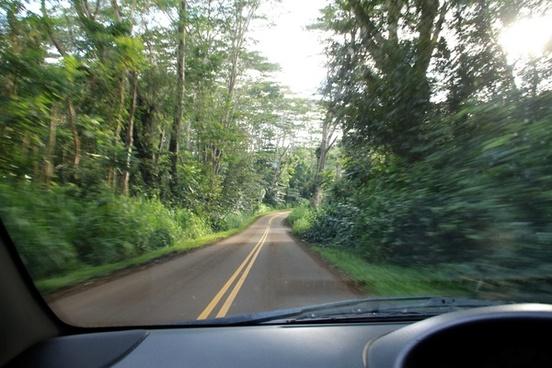 in car driving down road through jungle