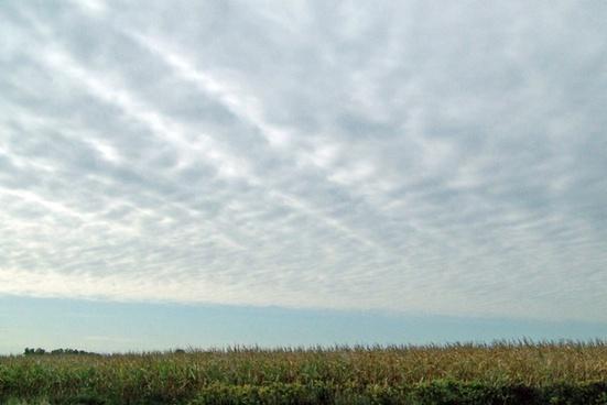 indiana cornfield and sky
