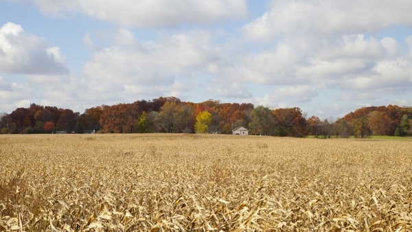indiana farm forest