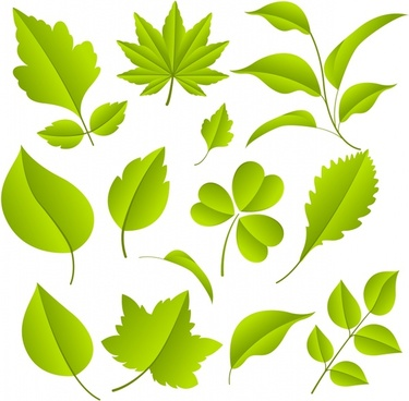 indus maple leaf clover vector