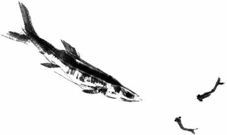 ink fish psd 12